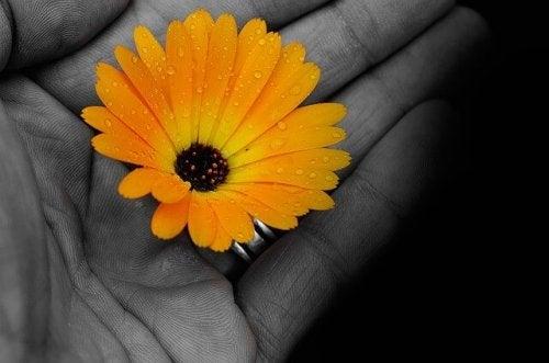 Żółty kwiat w dłoni