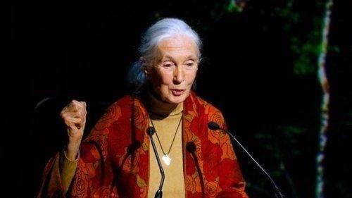 Jane Goodall na konferencji