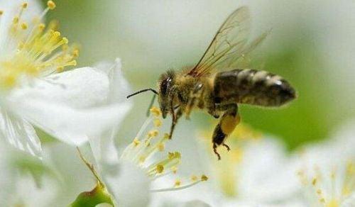 Czego możemy nauczyć się od pszczół
