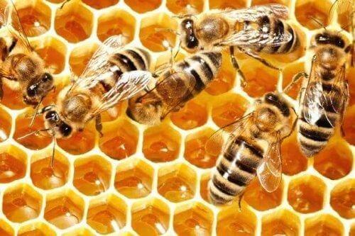 Czego możemy nauczyć się od pszczół - 2
