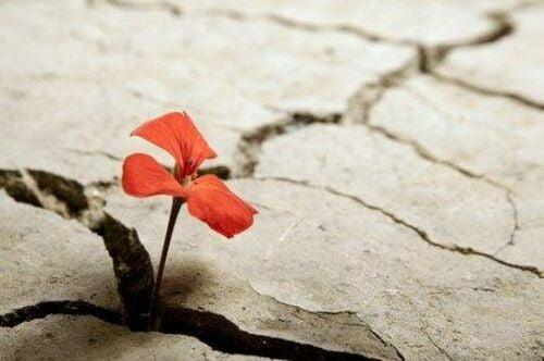 Kwiat rośnie w pęknięciu w chodniku