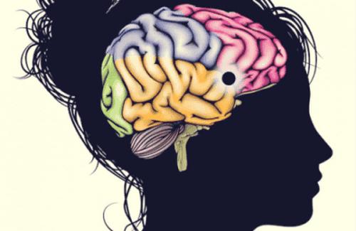 Płaty mózgowe - ich najważniejsze cechy i funkcje
