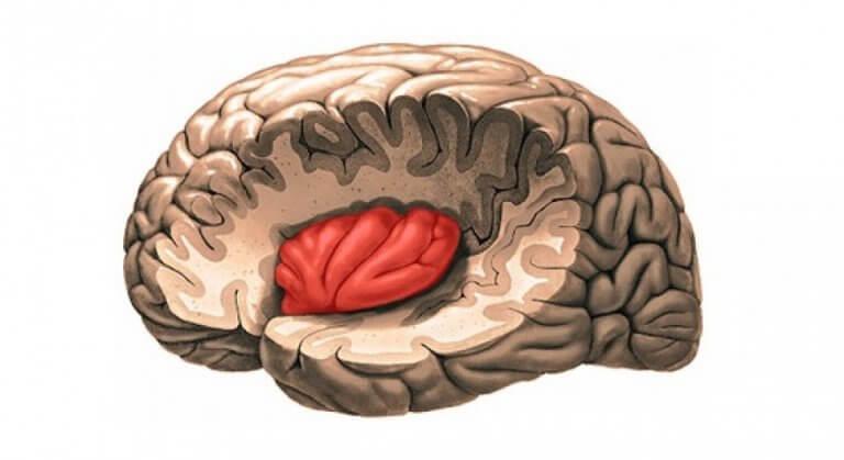 Wyspa w mózgu