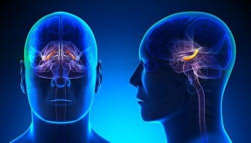 Mózg - związek pomiędzy hipokampem i samooceną