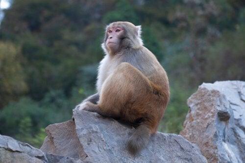 Siedząca małpa