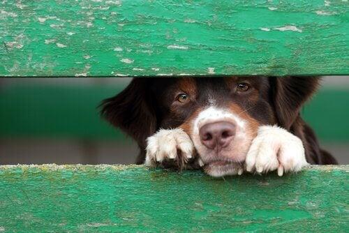 Smutny pies - świadomość zwierząt