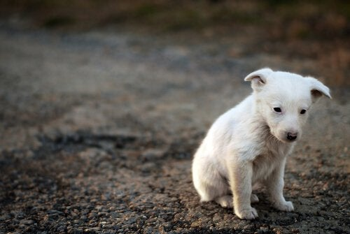 Świadomość zwierząt: czy są one w pełni świadome swojego cierpienia?