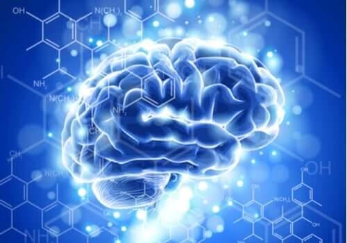 Neuroetyka: najważniejsze cechy i proces rozwoju tej nowej dyscypliny nauki