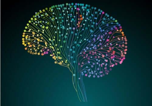 Human Connectome Project: naukowcy zdobywają coraz więcej wiedzy o mózgu