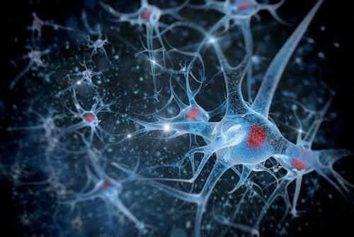 Biopsychologia a neurony