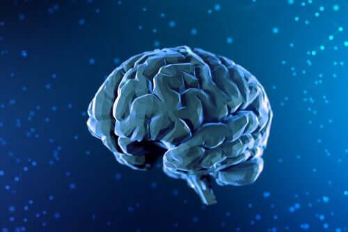 Cyfrowy rysunek mózgu