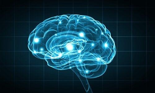 Biopsychologia - metody prowadzenia badań w tej dziedzinie nauki