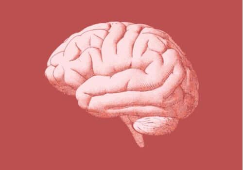 Tyłomózgowie: budowa i funkcje tego niezwykle ważnego dla nas obszaru mózgu