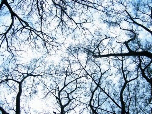 Dendryty - ich komunikacja a neuronaukowa rewolucja