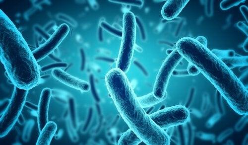 Pałeczki bakterii, a mikrobiom mózgu