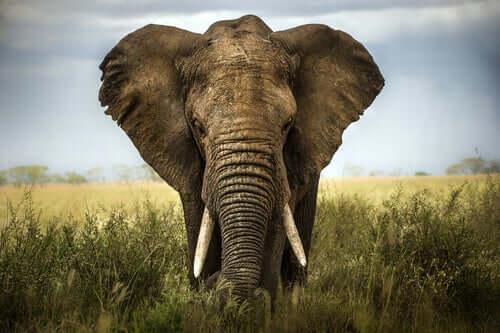 Słoń i sześciu niewidomych mędrców - poznaj ciekawą przypowieść z przesłaniem