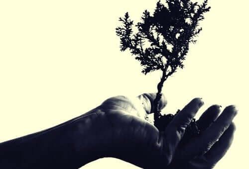 Drzewo w dłoni