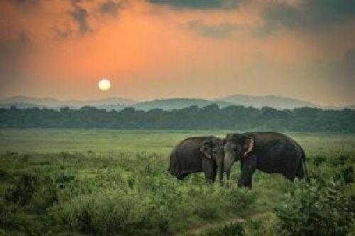 Smutne słonie: opowieść, w którą trudno uwierzyć, choć jest prawdziwa