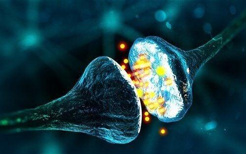 Synapsy chemiczne