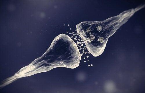 Synapsy elektryczne