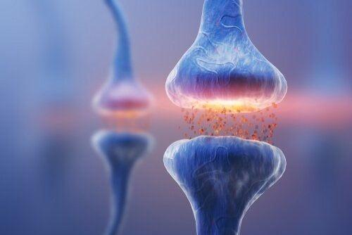 Synapsy i ich rodzaje: podstawy komunikacji na poziomie neuronowym