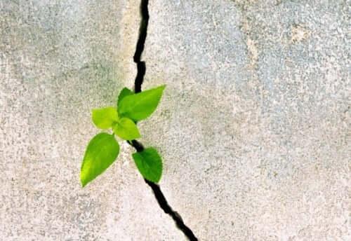 Odporność psychiczna symbolizowana przez roślinę rosnącą w skale