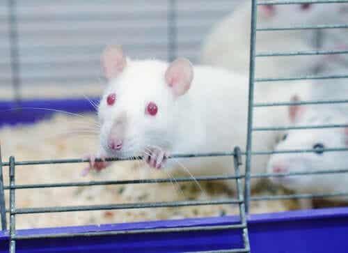 Niesamowity eksperyment w parku szczurów - dowiedz się o nim czegoś więcej!