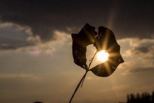 Listek z dziurką na tle zachodu słońca