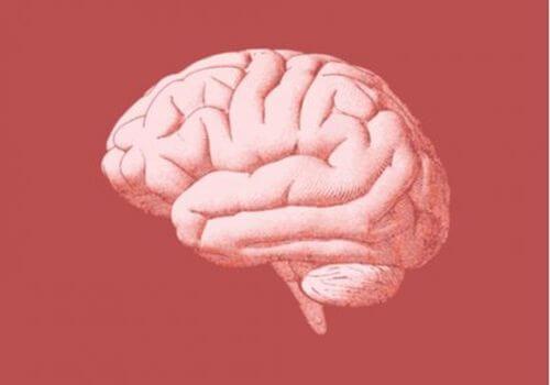 Mózg - rysunek