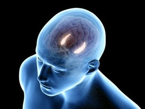 Pamięć deklaratywna i ośrodek w mózgu