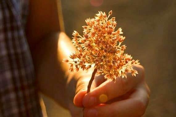 Ręka trzymająca kwiat