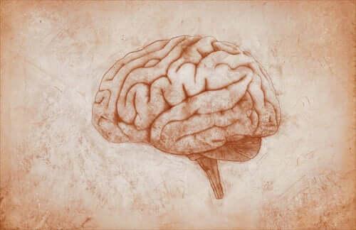 Rysunek mózgu