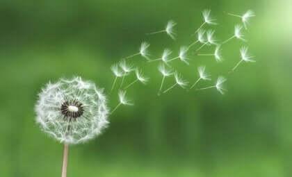 Zasada najmniejszego wysiłku – wykorzystaj ją, aby poradzić sobie ze stresem