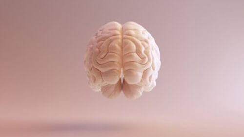 Ludzki mózg - grafika