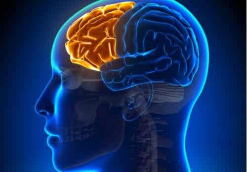 Zaburzenia funkcji wykonawczych - przyczyny i objawy