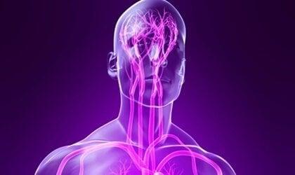 Somatyczny układ nerwowy