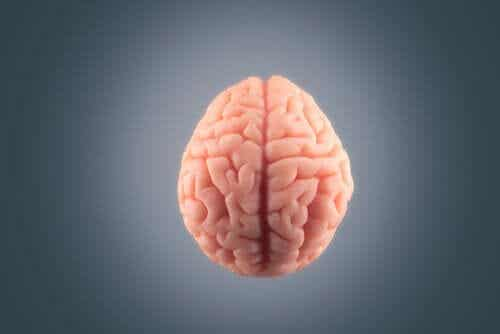 Co dzieje się z mózgiem przed śmiercią?