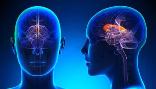 Mózg z różnych perspektyw