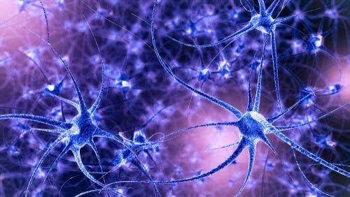 Plastyczność mózgu: jej charakterystyka i typy