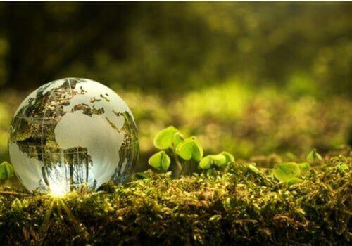 Jak mogę poprawić stan środowiska naturalnego w mojej społeczności?