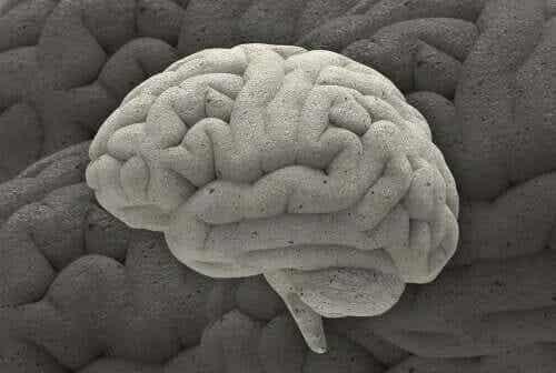 Przypadki neurobiologii - poznaj trzy najbardziej fascynujące