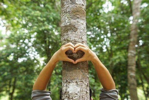 Serce na drzewie
