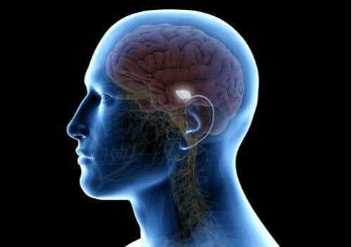 Substancja szara i jej wpływ na procesy nauczania, motorykę oraz reakcje