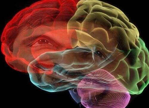 Sny i mózg