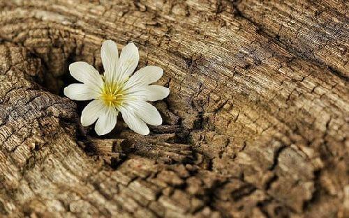 Kwiat w drewnie