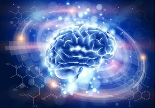 Mózg na schemacie