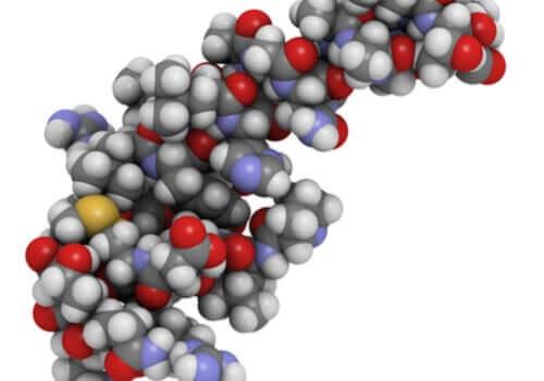 Oreksyny i ich wpływ na sen i dietę