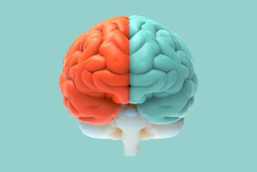 Dwie półkule mózgu