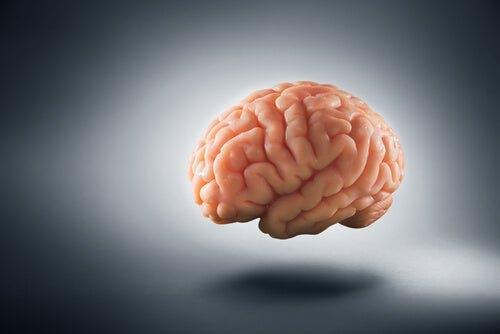 Jak ubóstwo zmienia ludzki mózg?