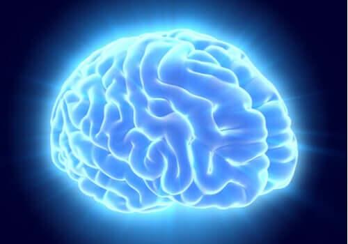 Podświetlony na niebiesko mózg